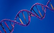 Recombinant DNA Technology for Vaccine Development