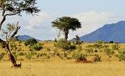 Types of Trees, Grass & Shrubs in the Savanna