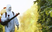 Biological Vs. Chemical Pest Control