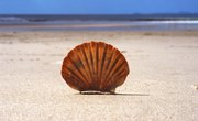 Seashell Facts for Kids