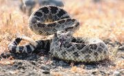 Snakes & Spiders in Santa Fe, New Mexico