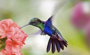 Ostrich & Hummingbird Similarities