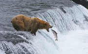 Animals of the Ecosystem