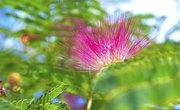 List of Leguminous Plants