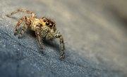 Common Northeast U.S. Spiders