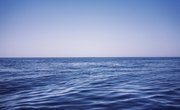 Which Animals Live on the Pelagic Zone?