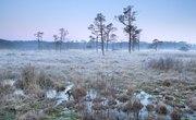 Where Are Bogs Located?