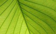 Why Do Plants & Animals Need Nitrogen?