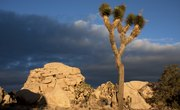 Interesting Facts About the Mojave Desert