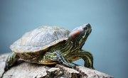 Where Do Turtles Live & Lay Their Eggs?
