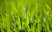 How Much Oxygen Does Grass Make?