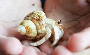 How to Find a Hermit Crab