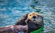 How to Build an Otter Shoebox Habitat