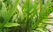 How Do Plants With Spores Reproduce?