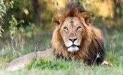 Animals in the Savanna of Africa