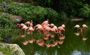 Are There Pink Flamingos in Hawaii?
