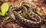 The Types of Snakes Found in East Tennessee