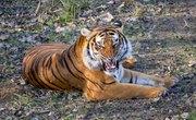 Five Endangered Species of Animals