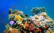Description of the Four Types of Aquatic Ecosystems