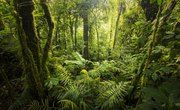 Facts About Understory Layer of the Rainforest