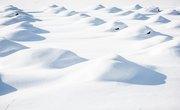 Five Biotic Factors on Tundra