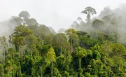 What Is the Average Rainfall in a Rainforest?