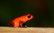 What Type of Body Coverings Do Amphibians Have?