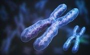 Are Male Y Chromosomes Shorter Than X Chromosomes?