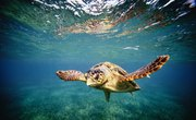 Animals in the Mediterranean Sea