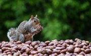 Where Do Squirrels Sleep?