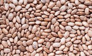 How to Grow Pinto Beans as a Science Project