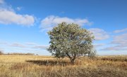 Differences Between Steppes & Savannas