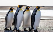 How Do Penguins Protect Themselves from Enemies?