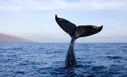How to Identify Whale Bones