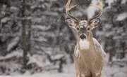 What to Feed Wild Deer