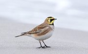 List of Birds in Florida