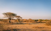 Natural Resources for People in the Savanna Grasslands