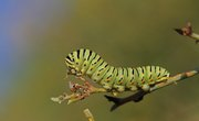 How to Identify Worms & Caterpillars