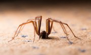 How to Identify Spiders in Alberta