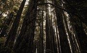 Zones for Redwoods