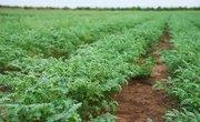 Crops That Enrich the Nitrogen Content of Soil