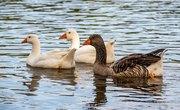 How to Build a Goose Nesting Box