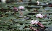 Aquatic & Terrestrial Plants
