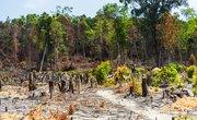 Cambodia's Environmental Problems