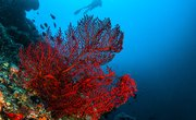 Trophic Levels of Coral Reefs
