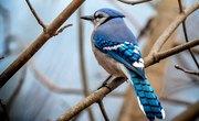 Birds That Like Shiny Things