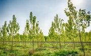 Advantages and Disadvantages of Afforestation