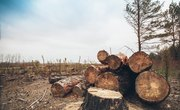 What Are Some Advantages & Disadvantages of Clear Cutting?