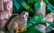 List of Rain Forest Animals