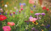 Why Are Flowering Plants Important to the Earth & Humans?